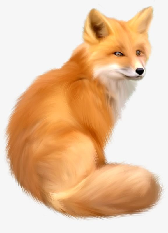 Fox Fox Clipart Animal Png And Vector With Transparent Background For Free Download Animal Clipart Fox Animals