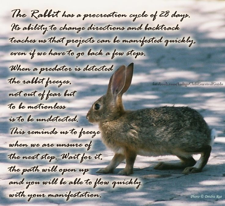 The Rabbit teaches to tune in to the surroundings, retrace steps when necessary, take leaps and creation will flow.