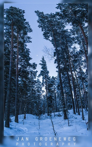 Nature in Linkoping, Sweden (magical love snow night moon forest trees) - a photo by Jan Groeneweg
