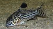 Tropical Fish species information index