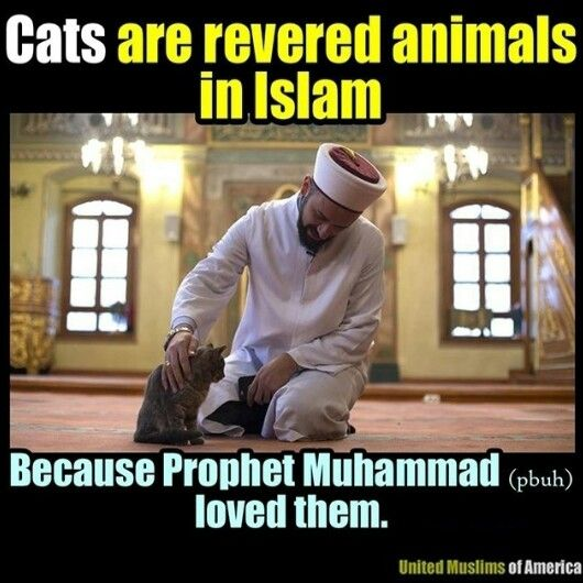 Prophet Muhammad Was Not A Cat Lover - pictures-of-cats.org