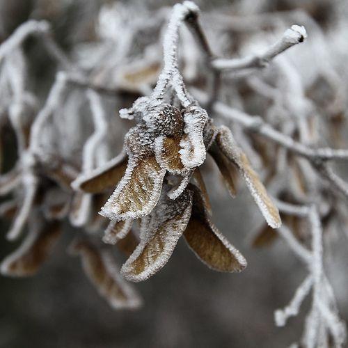 Salt frost 8082