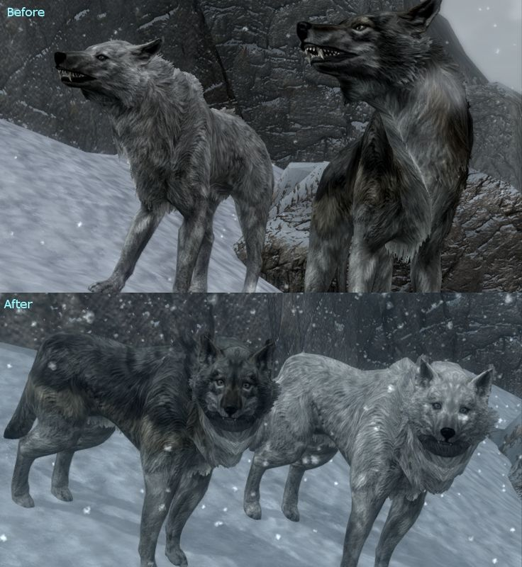 Can You Have A Pet Dog And Troll Skyrim