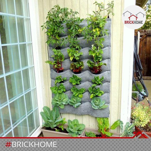 Elegant Huertos verticales verdes ocupan poco espacio y son ideales para cuidar el ambiente y er
