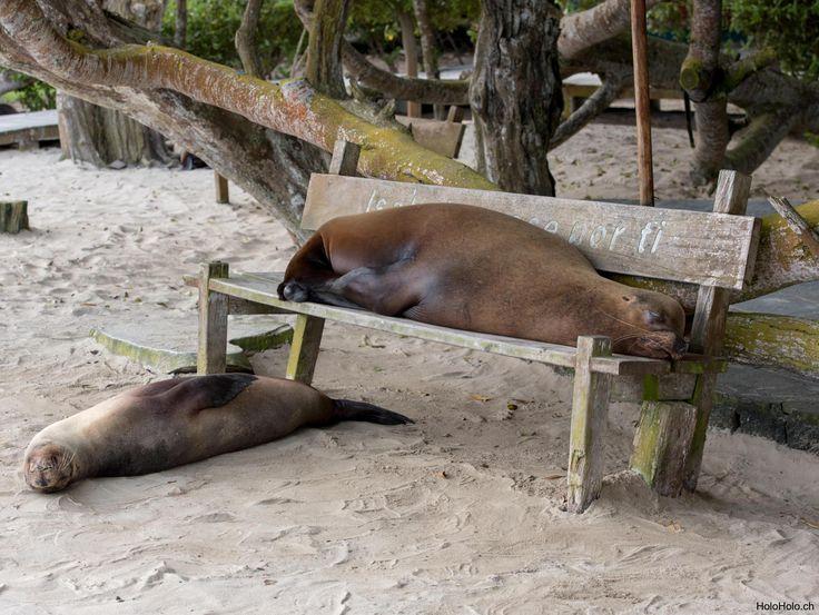 Galapagos ohne Plan