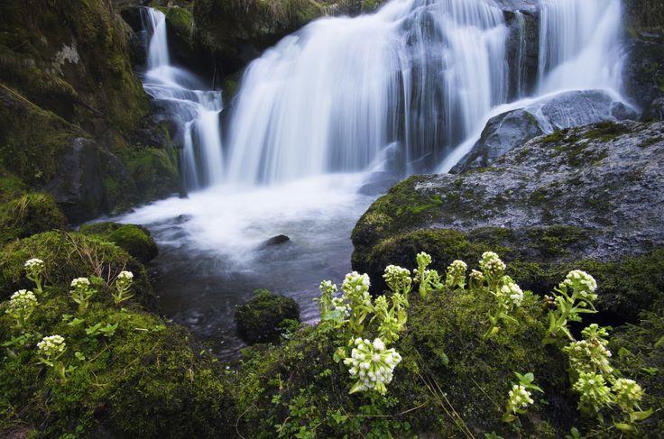 Der Wasserfall ist neben dem Todtnauer Wasserfall kaum bekannt trotzdem ist der Wasserfall im Schwarzwald einen Ausfug wert.
