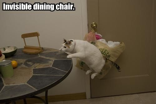 25 Funny Pictures of Cats with Invisible things...these are hysterical!!