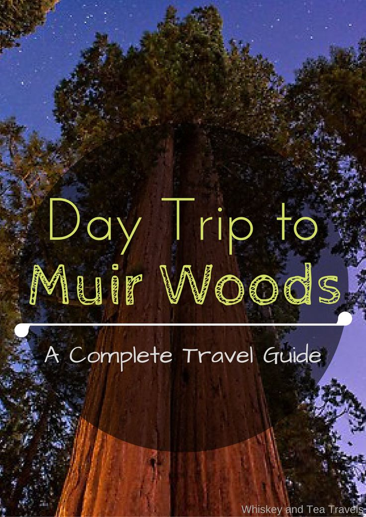 Explore the magic of Muir Woods National Monument. What to bring, what not to do, and extra tips for how to make the most of your day near the San Francisco bay.   My time exploring Muir Woods was my favorite day during my week long San Francisco trip. I was (and still am) amazed …