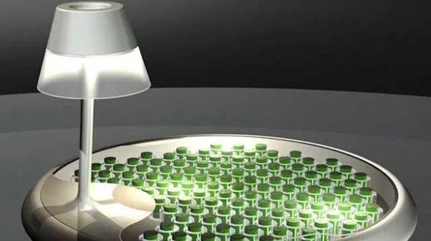 TAVOLINO CHE PRODUCE ENERGIA DAL MUSCHIO: Presentato al Fuorisalone di Milano. Utilizza la tecnologia biofotovoltaica. Il muschio è contenuto in piccoli vasi sotto il piano trasparente del tavolo che funzionano come fotobiocelle in grado di produrre 520 Joule di energia ogni giorno; le proprietà fotosintetiche della pianta innescano un processo bio-elettrochimico, durante il quale l'energia chimica è convertita in energia elettrica.