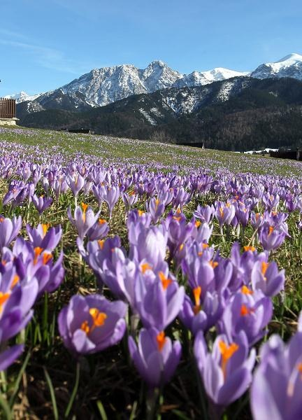spring in Tatra Mountains, Poland.