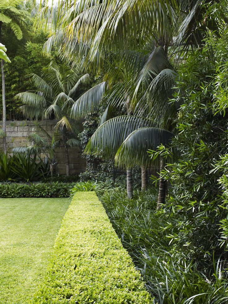 Buxus hedge with mixed planting