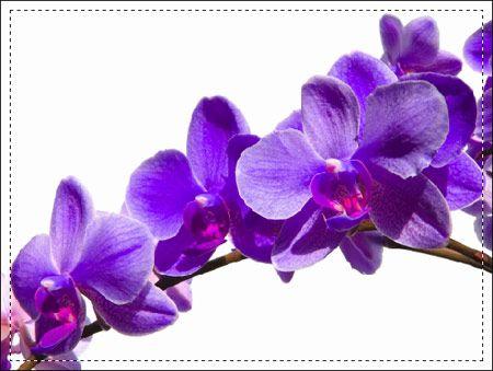 Fiori 112 - Fiori - Foto Artistiche su Tela - Listino prodotti - Digitalpix - Artistic photo - Canvas art - Flower - Home decor - Decorazione casa - interior design ideas - idee design interni