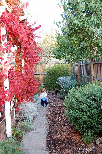 Garden inspiration using Australian native plants narrow plantings