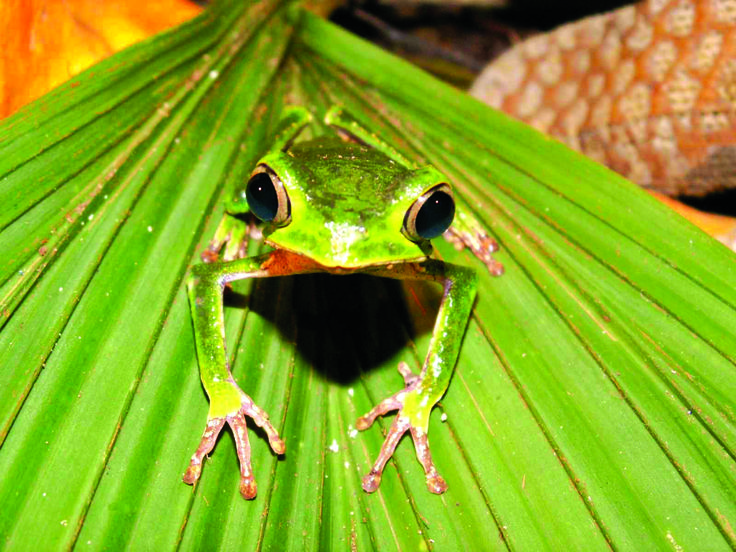 animals in the rainforest | Top 10 facts about the Amazon Rainforest | The Inside Track | Travel ...