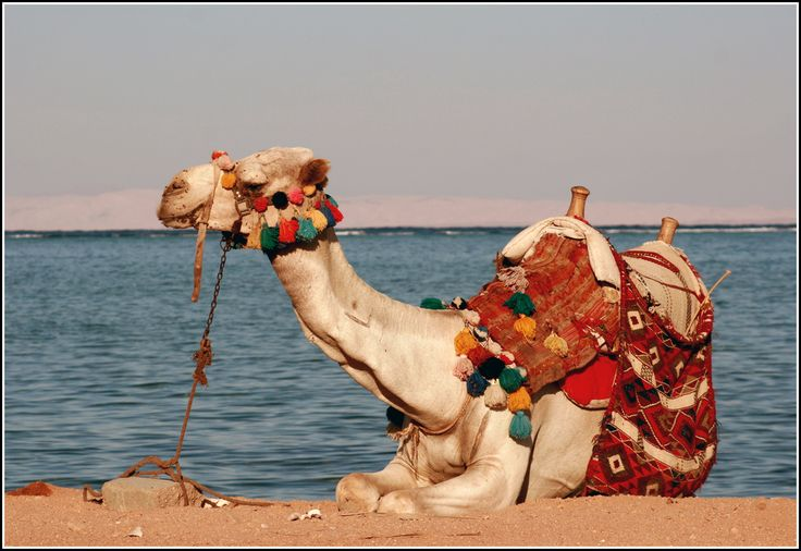 On the beach, Saudi Arabia in the background.