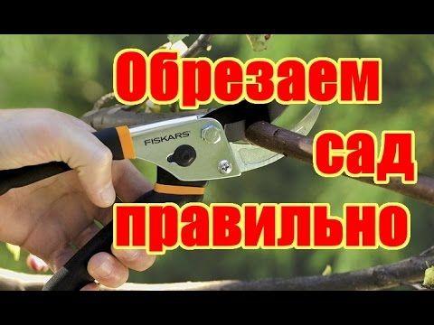 Как правильно обрезать и формировать фруктовые деревья / Весенняя обрезка деревьев в саду - YouTube