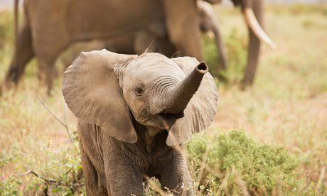 Petition · African Wildlife Foundation: Create stricter laws against poaching and habitat destruction in Africa · Change.org
