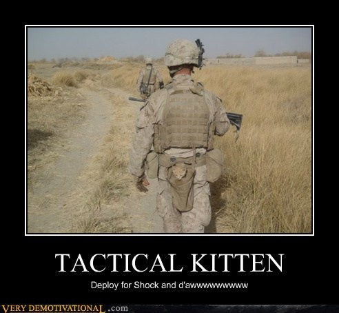 TACTICAL KITTEN: Deploy for shock and awwwwwwww