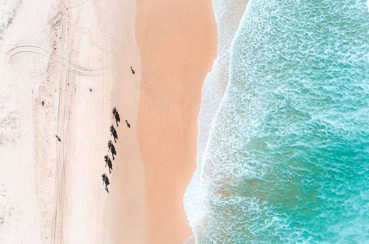 Camels on Lighthouse Beach Port Macquarie Australia