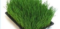 How to Juice Wheat Grass with a Jack LaLanne Juicer | eHow