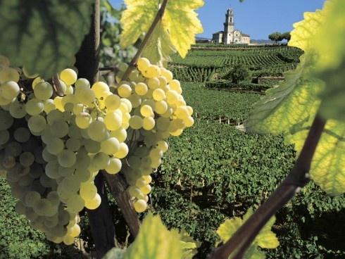 Viñedo, España    http://www.zoomnews.es/estilo-vida/viajes/viajes-ultima-hora-puente-constitucion
