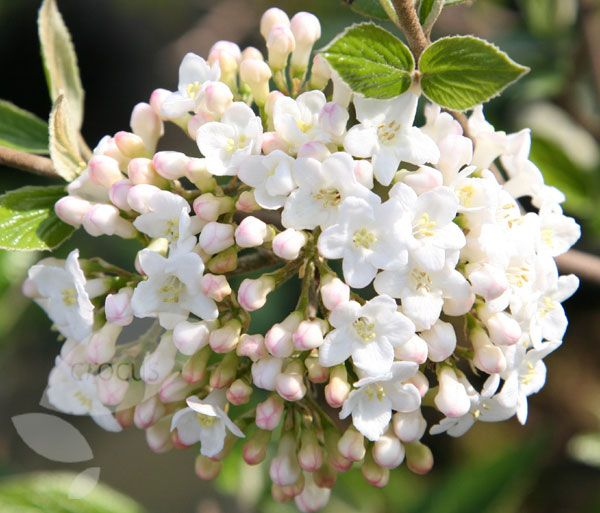 436 best white flowers images on pinterest find this pin and more on white flowers mightylinksfo