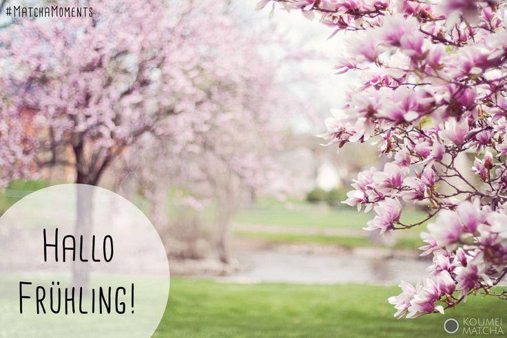 #Frühlingsanfang mit blühenden #Magnolien. #MatchaMoments von Koumei Matcha, gefunden im Matcha Blog: http://www.koumei-matcha.de/blog/ #Matcha #GreenTea