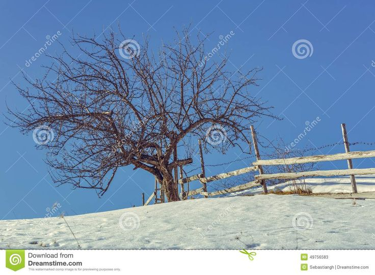 Old solitary leafless tree and rustic wooden fence over clear blue sky during winter.