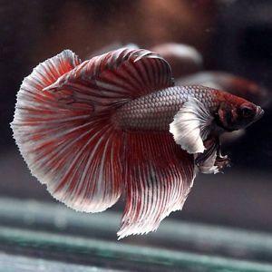 #fishtank #aquarium #freshwater #aquariumplants #aquaticplants #aquascape   289778557267181638