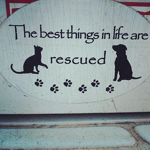 Senior Cat Quotes: 25+ Best Animal Rescue Quotes On Pinterest