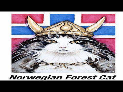 Valhalla Viking Cats Rescue – The Catnip Mafia by The Catnip Mafia Shelter