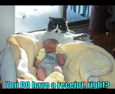 funny cat meme of a black-and-white feline looking at a crying baby