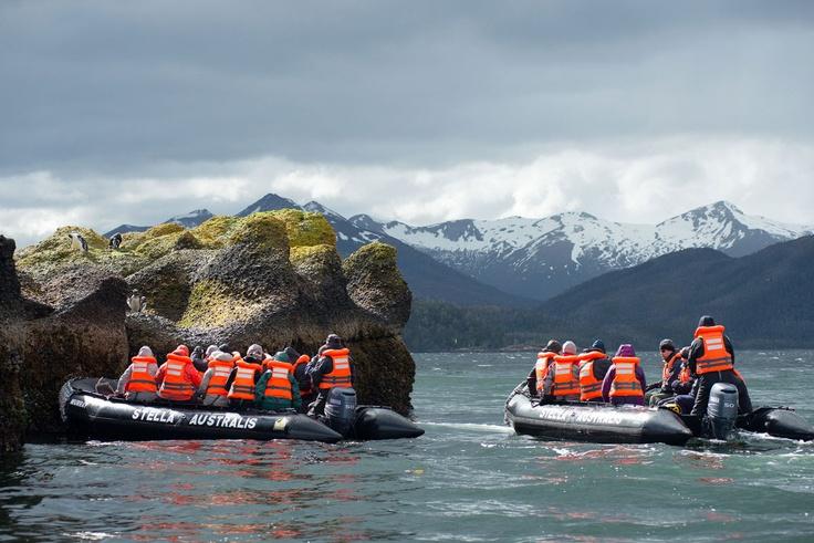 Pingüinos de Magallanes en Isla Tucker