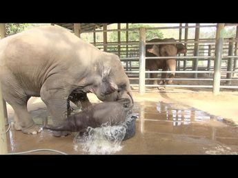 Baby Elephant Bath Time Part2 - YouTube