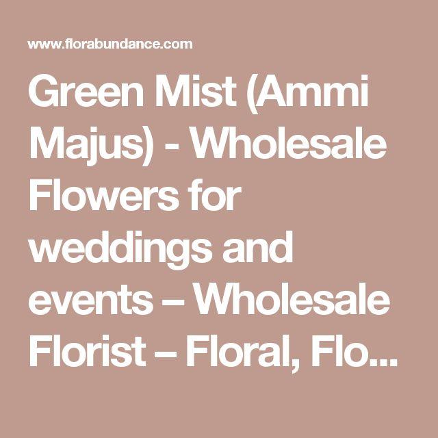 Green Mist (Ammi Majus) - Wholesale Flowers for weddings and events – Wholesale Florist – Floral, Floral Supply, Flower Distributor