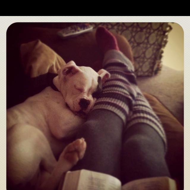 Looks just like Finn cuddling up.  :)
