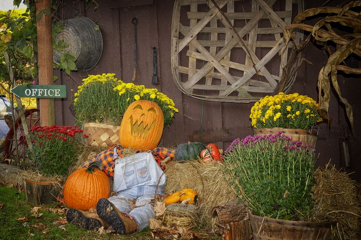 One of our favorite fall guests, Pumpkin Pete! #fall #vacation ---> http://www.rvcoutdoors.com/mountain-springs/