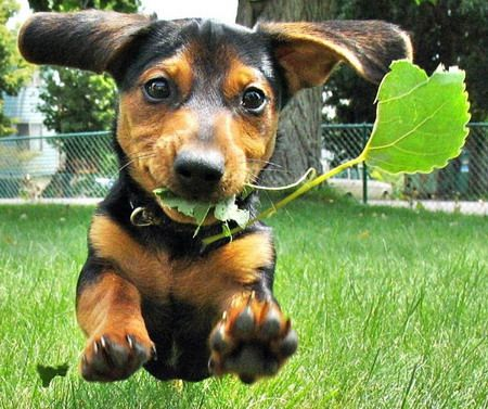 Doggies - on a grass: Puppies, Animals, Dogs, Pets, Funny, Doxies, Puppy