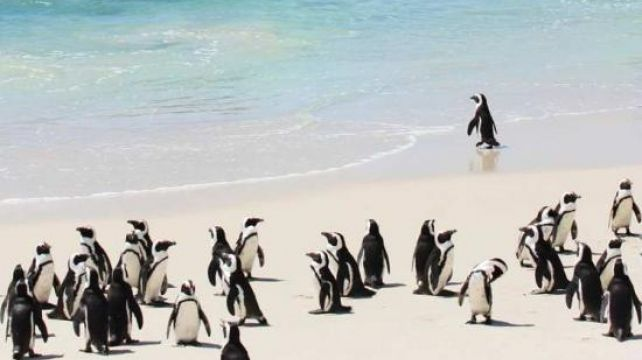 An iconic journey discovery into diverse South Africa | Nature Family Holiday, Garden Route & Meerkats Travel Experience | Combadi