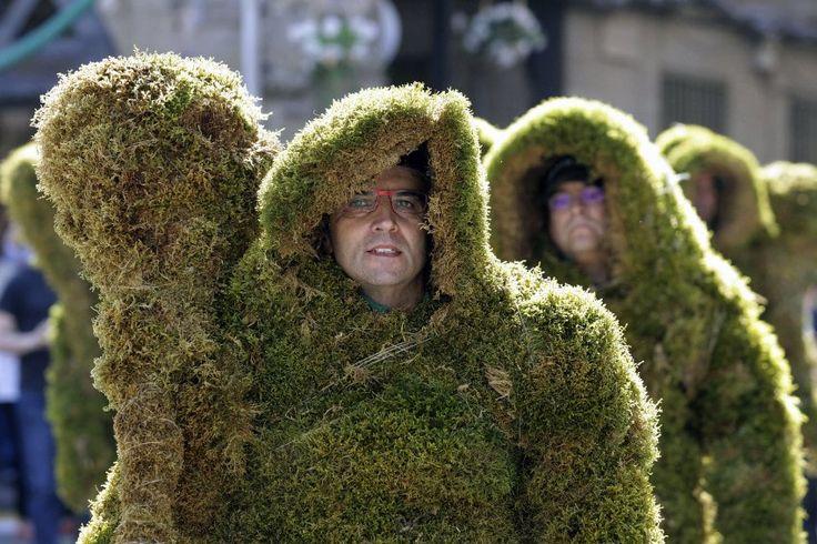 Ohne Moos nix los: Einmal im Jahr wird die Grünpflanze im spanischen Bejar...