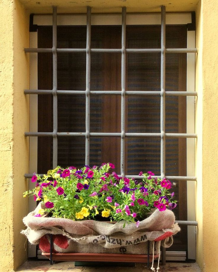 Spring flowers and hessian a window box during Vicopisano's annual festival of flowers held in the meantime nth of May
