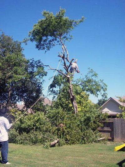 tree removal... always careful around those fences