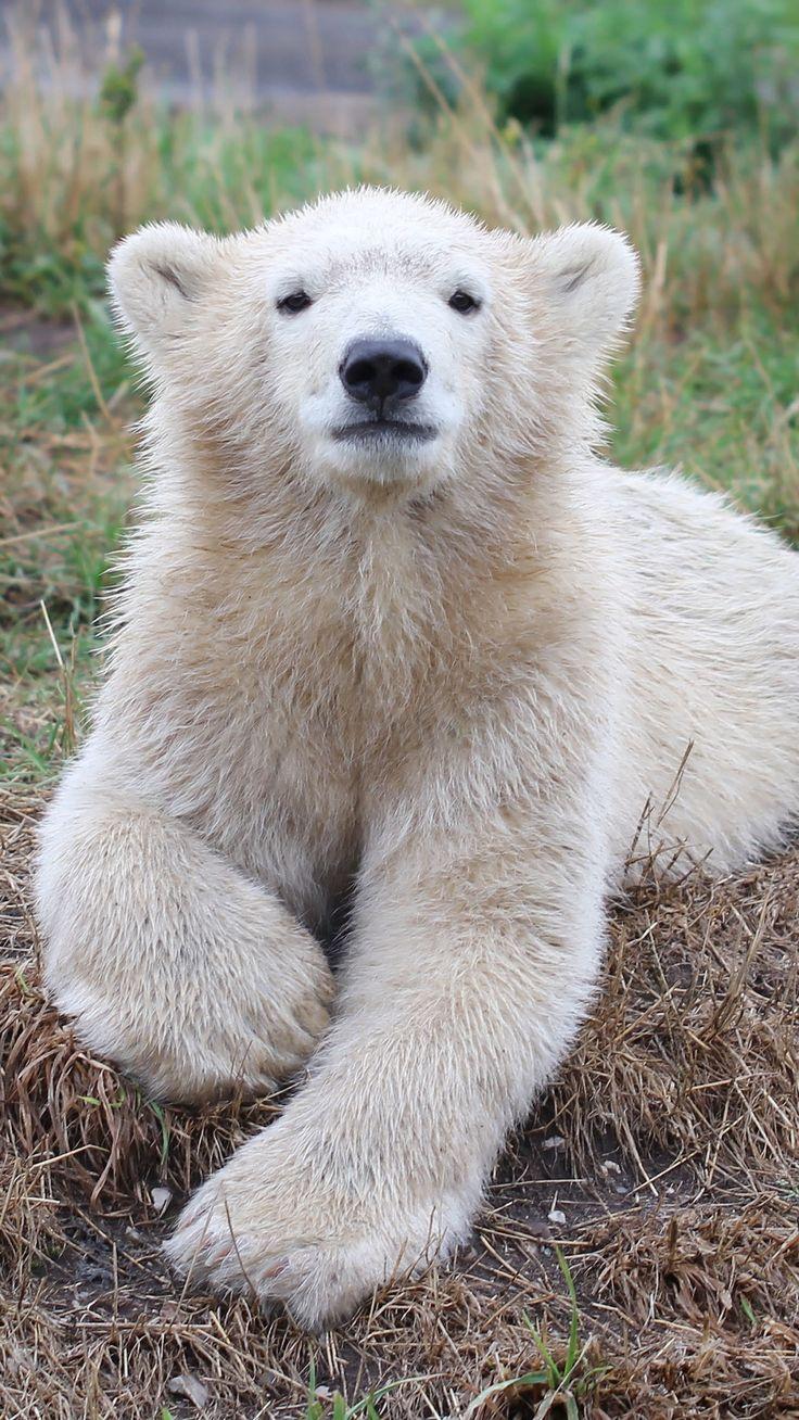 Polar bear cub                                                                                                                                                                                 Mais