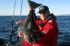 HALIBUT AND PLAICE FISHING LOFOTEN NORWAY Ideal for fish species such as Halibut…