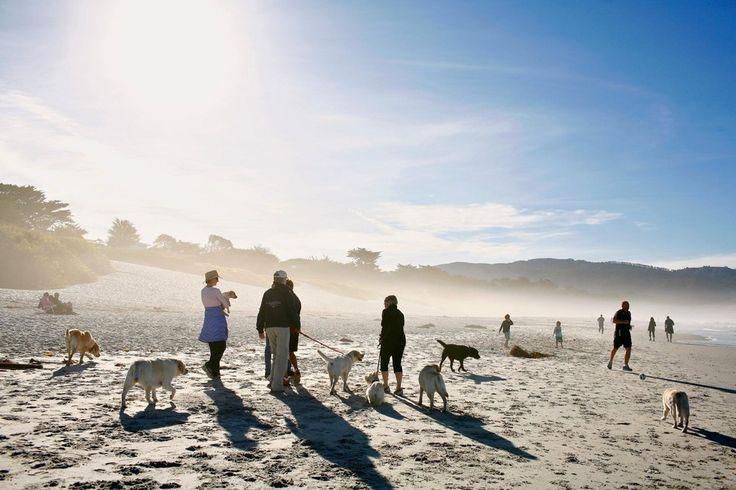 """Carmel City Beach, Carmel-by-the-Sea, Californië. """"Geen idee wie hier het meeste plezier heeft, de honden die hier zonder lijbaan kunnen rondrennen of hun baaasjes, die richting het noorden zicht hebben op het wereldberoemde Pebble Beach en in het zuiden op Point Lobos,"""" zegt Kelly E. Carter, auteur van National Geographic's boek The Dog Lover's Guide to Travel."""
