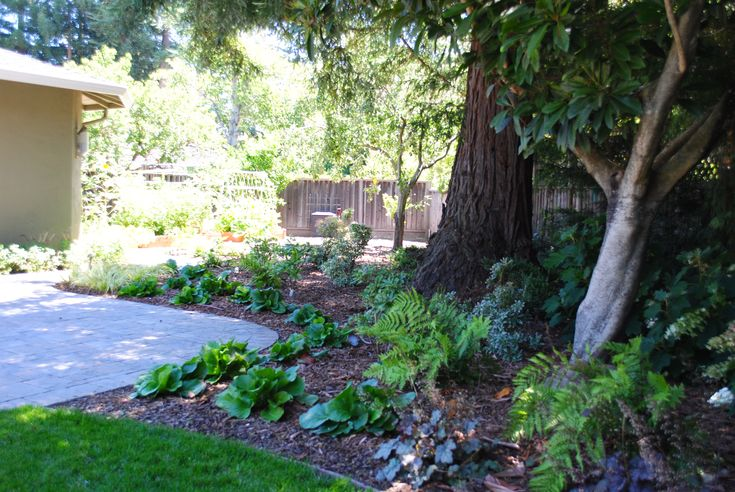 landscaping in shade shade garden under redwood trees julie orr design garden inspiration. Black Bedroom Furniture Sets. Home Design Ideas