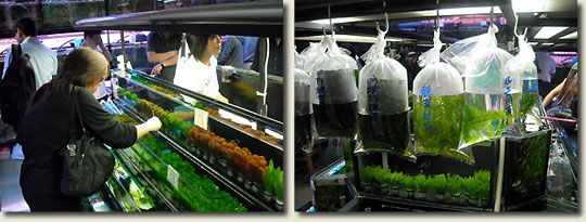 aquarium shop - Google Search