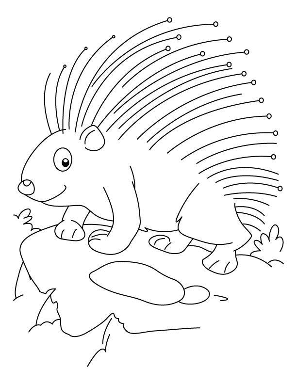 Porcupine Coloring Pages Best Coloring Pages For Kids Animal Coloring Pages Coloring Pages Free Printable Coloring Pages