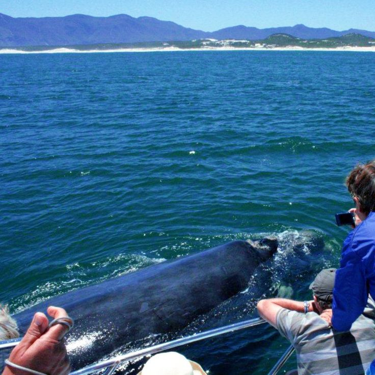 October and November are the best months of the year to have this amazing opportunity to view the magnificent Southern Right Whales along our Cape coastline.  One of the best places to do so is in Gansbaai.   Stay in Gordon's Bay at Gordon's Beach Lodge with our special on for October and make a huge saving! Not only on accommodation but also on the Whale tour! Contact us to see how much you can save! Phone021 856 3519 Emailinfo@gordonsbeachlodge.co.za