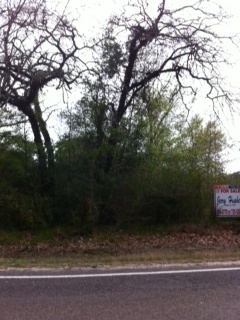 8133 FM 1130 Orange, TX, This 5.13 parcel of land currently has available a parrell piece of property that is 5.38 acres.  Call Taura Hogan at 409-988-9188, t.dediego@yahoo.com for any information.